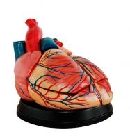 New Jumbo Style Heart Model