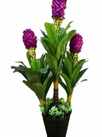 Pineapple tree with a meter measuring 40 and a distinctive shape
